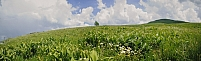 Prairie en Auvergne