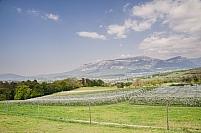 Vergers de Savoie au printemps