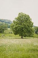 Prairies en Auvergne